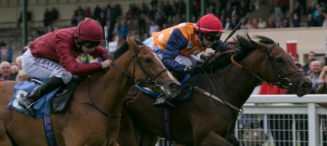 Winner at Ripon